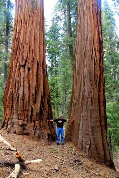Dad and the Sequoia Giants