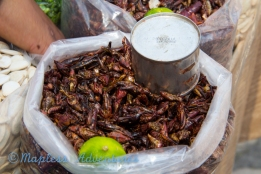 Roasted and Seasoned Crickets.