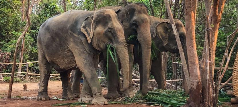 Two Friends in Thailand | Elephant Jungle Sanctuary,Phuket
